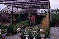 Dicksons Florist 158 Ingersoll Rd Woodstock 08.jpg