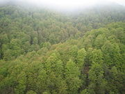 Dilijan forest national park.jpg