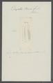 Diopatra baerii - - Print - Iconographia Zoologica - Special Collections University of Amsterdam - UBAINV0274 102 04 0012.tif