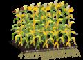 Diseased Plant.png