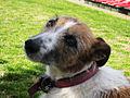 Dog - Bondi, 2010.jpg