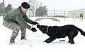 Dog days of winter 150226-F-BO262-031.jpg