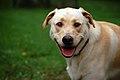 Dog smiles 2.jpg