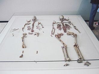 Rheinisches Landesmuseum Bonn - Image: Doppelgrab von Oberkassel skeletons
