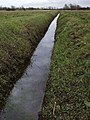 Drain at Ryther Ings - geograph.org.uk - 737653.jpg