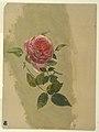 Drawing, A Rose Bough, 1860–70 (CH 18202453).jpg