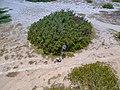 Drone base Klein Curacao (34873663256).jpg