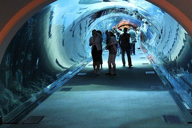 Image Result For Underwater Aquarium Mall