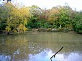 Duck Pond - geograph.org.uk - 596425.jpg