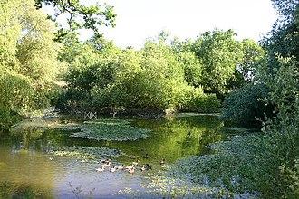 Coldham Hall - Duckpond at Coldham Hall