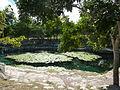 Dzibilchaltún Cenote - P1110787.JPG