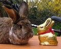 Easter bunnies - Flickr - foshie.jpg