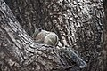 Eating Squirrel 1 (117203071).jpeg