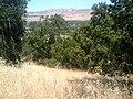 Edenvale, San Jose, CA, USA - panoramio - phxhawke (7).jpg