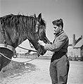 Een man met een paard in het Joodse werkdorp in de Wieringermeer, Bestanddeelnr 254-4924.jpg