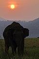 Elephant Silhoutte.jpg