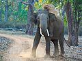 Elephant mudbath (32226725660).jpg