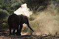 Elephant taking a dust bath.jpg