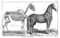Encyclopédie méthodique - Mammalogie, Pl3.png