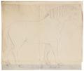 Equus quagga - 1700-1880 - Print - Iconographia Zoologica - Special Collections University of Amsterdam - UBA01 IZ21700103.tif