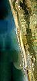 Estuary of Teshio river Aerial photograph.1977.jpg