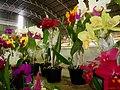 Exposição Nacional de Orquídeas de Catanduva no Colégio Nossa Senhora do Calvário - Colegião - panoramio (4).jpg