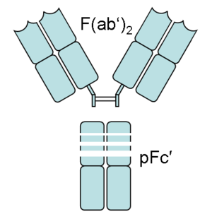 Fragment antigen-binding - An antibody digested by pepsin yields two fragments: a F(ab')2 fragment and a pFc' fragment