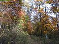 Fall-hiking-trail ForestWander.JPG
