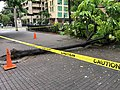 Fallen Tree at Fort Street Mall due to Tropical Storm Olivia (39925629763).jpg