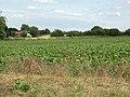 Farmland by Hartsbuckle Farm - geograph.org.uk - 1399984.jpg