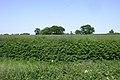 Farmland with trees round a pond - geograph.org.uk - 1432644.jpg