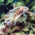 Fauna marina de Venezuela.jpg