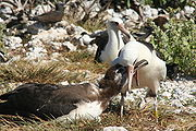 Feeding chick.JPG