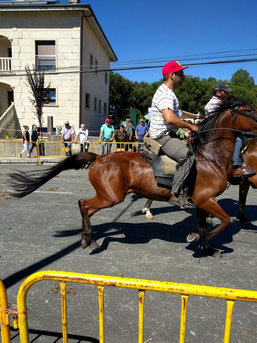 Festa dos Cabalos, Teixeiro (2016)
