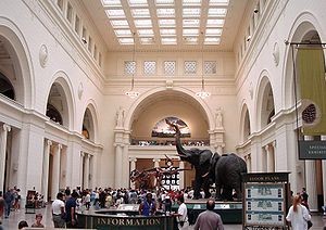 Field Museum of Natural History - Main Hall