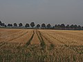 Field in the Netherlands countryside (11449885125).jpg