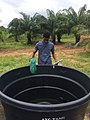 Fish pond farming.jpg