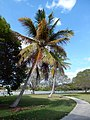 Flamingo Visitor Center - panoramio (1).jpg