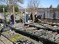 Flickr - brewbooks - Plant Sale.jpg