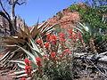 Flora in Sedona (3878769297).jpg