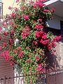 Flora of Esino Lario 3.jpg
