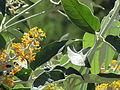 Flores en el Jardín Botánico de Viña del Mar 20.JPG