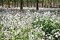 Flower - panoramio (13).jpg