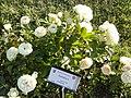 Flowers - Fiori (17498017086).jpg