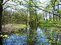 Flusslauf Boberger Niederung.JPG