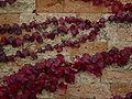 Foglie autunnali - Cimitero - Foto di Giovanni Dall'Orto.jpg