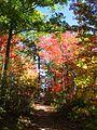Foliage (1698860640).jpg