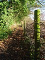 Footpath, Chartridge - geograph.org.uk - 1081158.jpg