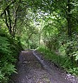 Footpath alongside Afon Cwm-wern - geograph.org.uk - 1344740.jpg
