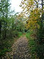 Footpath near Beech Hill - geograph.org.uk - 398174.jpg